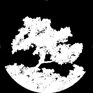 Un arbre blanc